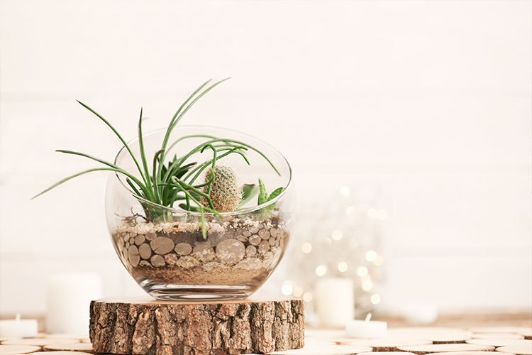 7 Easy And Attractive Succulent Decorating Ideas