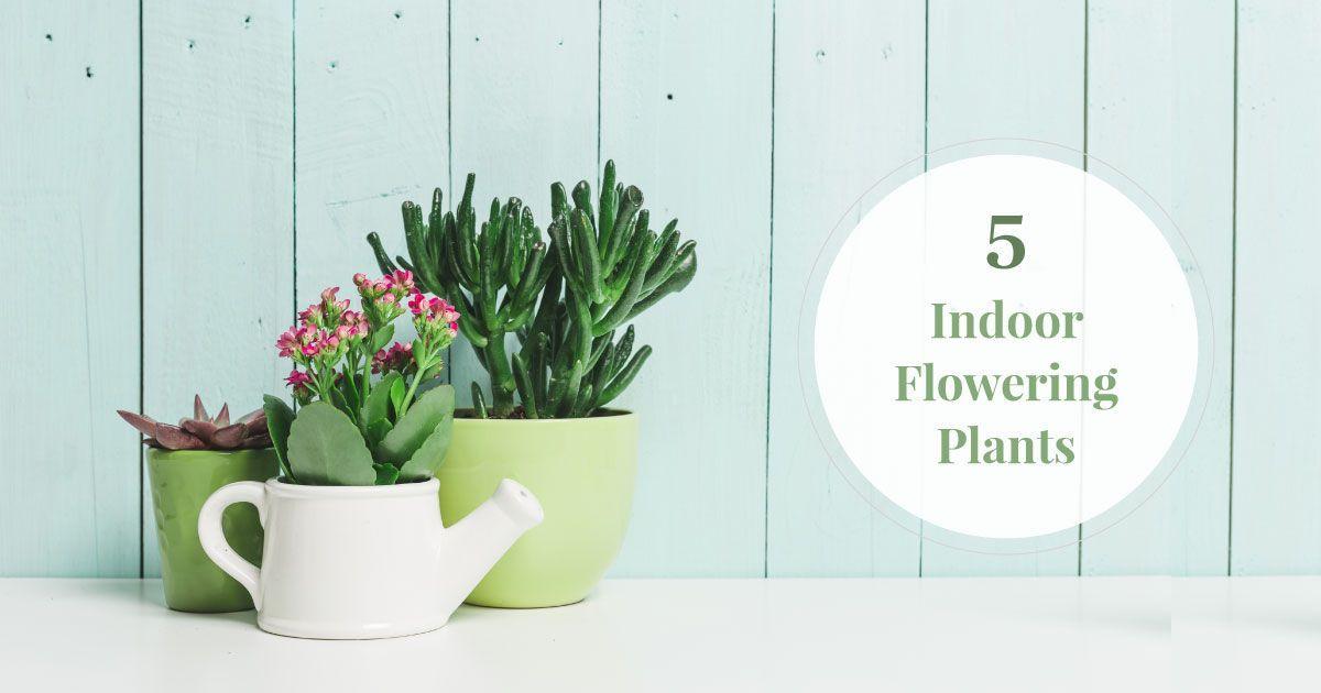 Best & Beautiful Indoor Flowering Plants