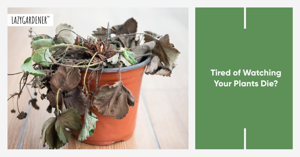 5 Reasons Why Your Plants are Dying & How to Save Them
