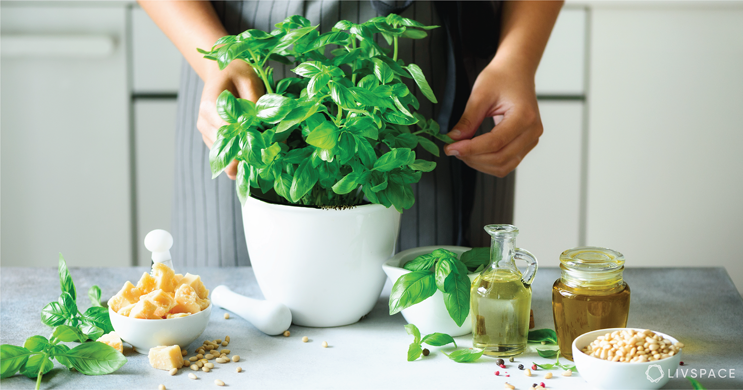How to Grow Essential Indian Herbs Easily at Home