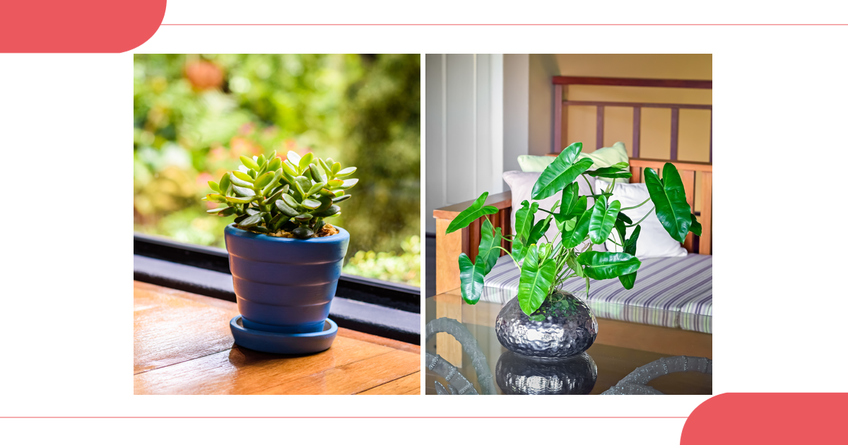 7 Houseplants That Thrive South of the Vindhyas