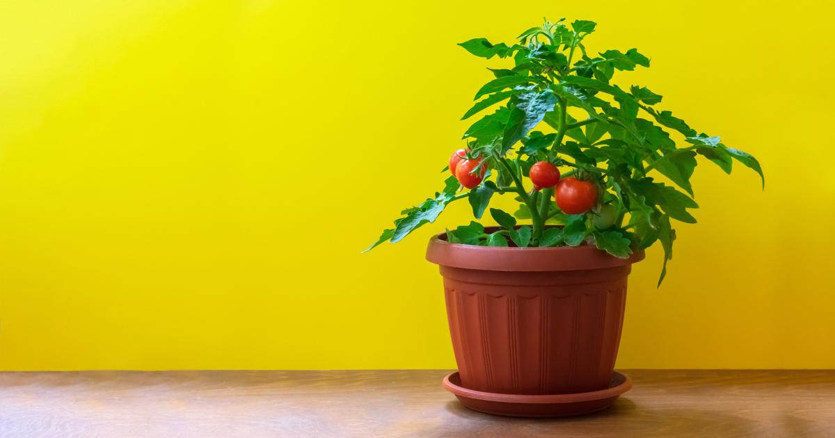 5 Veggies That Grow Easily in Your Balcony Garden