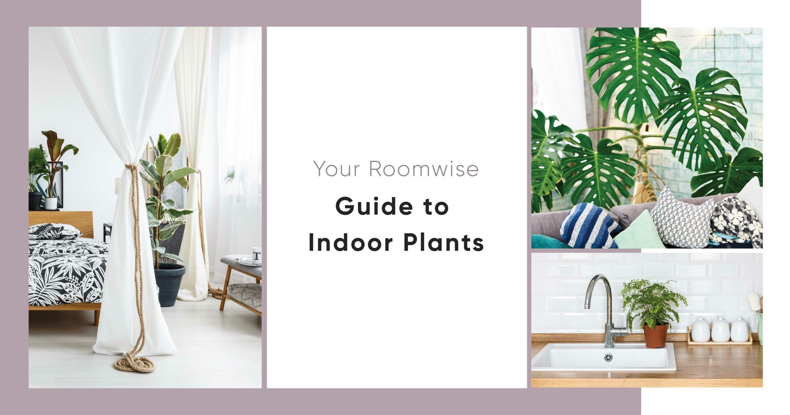 Why Do Some Plants Grow Better in Certain Rooms?