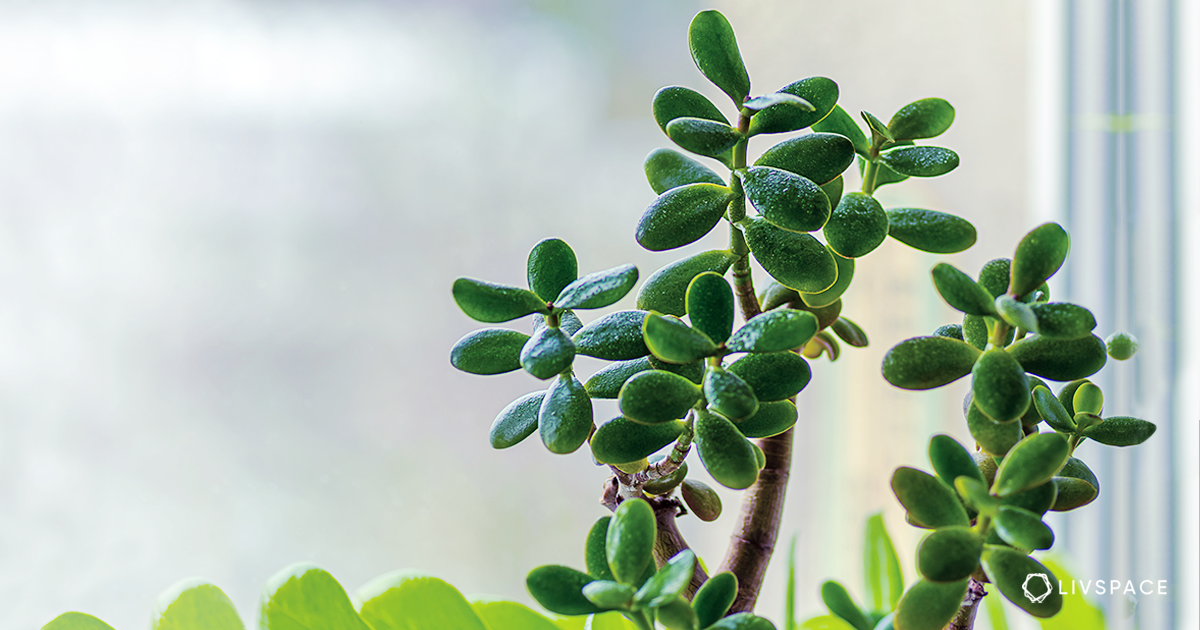 This Plant Attracts & Brings Home Wealth & Fortune. Do You Have It Yet?