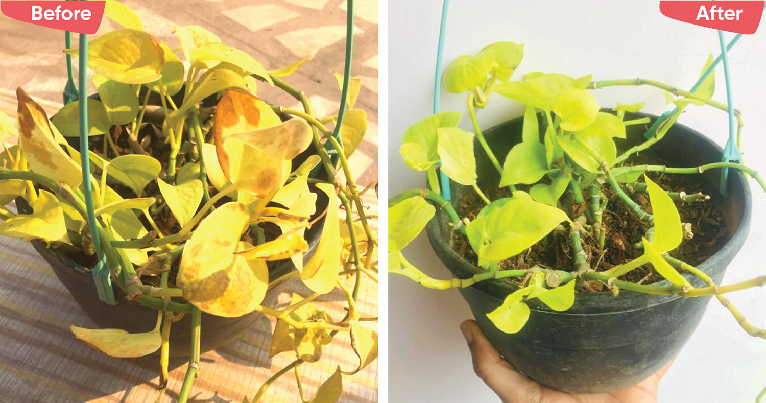 Top 5 Reasons Why Your House Plants are Dying & How to Revive Them