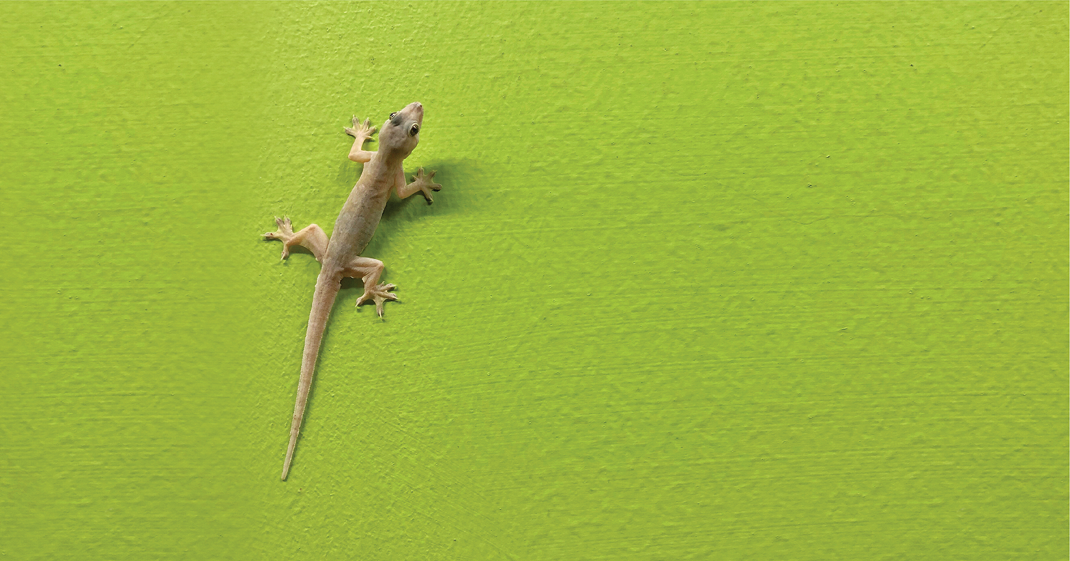 Actionable Home Remedies to Get Rid of Lizards