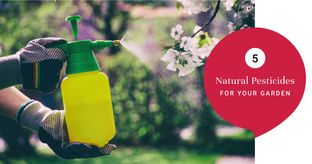 Chemical-free Ways to Keep Insects at Bay