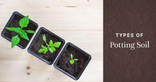 Which is the Best Soil for your Plants?