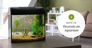 How to Decorate Your Aquarium