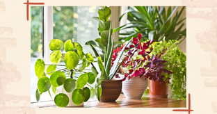 indoor plants without sunlight
