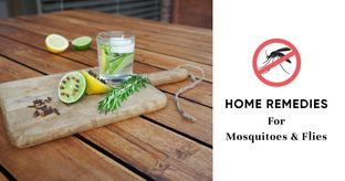 Chemical-free Ways to Get Rid of Flies