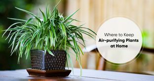 7 Spots to Keep Air-purifying Plants at Home