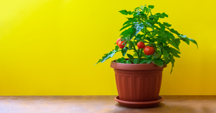 5 Veggies That Grow Easily in Your Balcony Garden