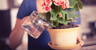 You're Watering Your Plants All Wrong! Here's What You Need to Know