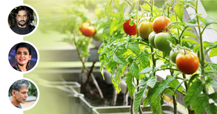 How to Grow Your Own Food on the Terrace Like Celebrities