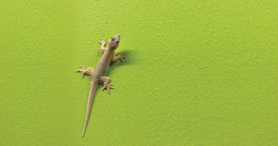 Lizards Creeping You Out? Try These 8 Effective Home Remedies