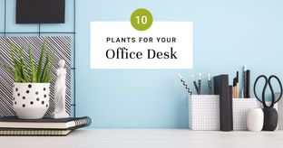 Plants That Bring Good Vibes to Work