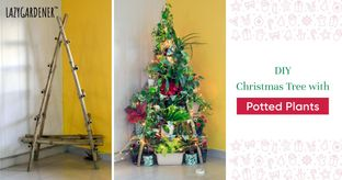 Christmas Tree With Potted Plants?