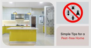 Are Bugs Wreaking Havoc in Your Home?