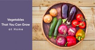 Why Buy When You Can Grow Your Own Vegetables at Home?